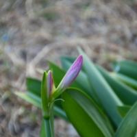 The Flower Bud and What It Has Become (2 photos)
