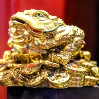 The Golden Toad...!